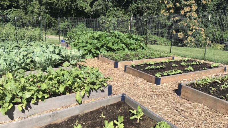 Green plants grow in raised beds in campus garden.