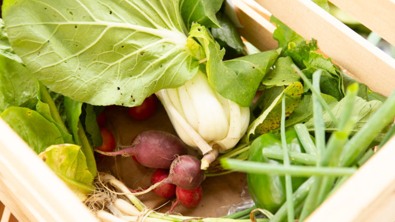 a box of vegetables including pak choy, radishes, green onions and peppers