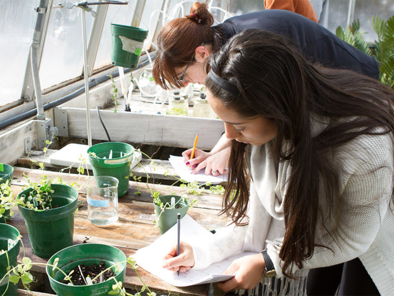 Students do research on pea plants in the greenhouse