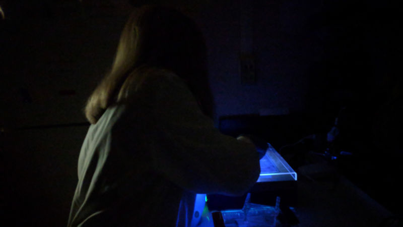 Baden Academy student Kaitlyn Desrochers works on a DNA sample in Cassandra Miller-Butterworth's laboratory.